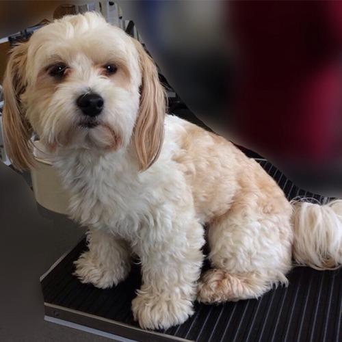 Dog Grooming York